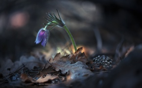 Picture flower, nature, spring