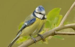 Picture bird, branch, common blue tit