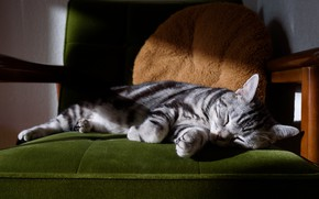 Picture cat, cat, pose, comfort, grey, background, room, sleep, chair, paws, sleeping, lies, shadows, pillow, striped, …