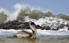 Picture sea, bird, wave