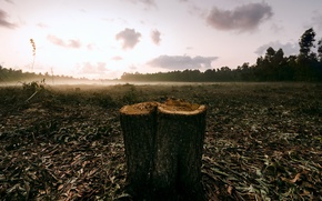 Picture field, fog, stump
