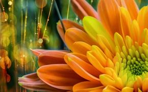 Picture flower, bokeh, retouching, by dashakern