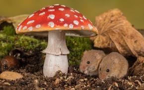 Wallpaper leaves, moss, mushroom, mouse, nature, mushroom, pair