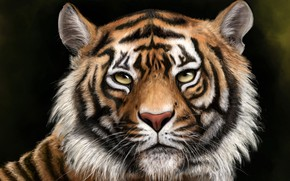 Picture face, tiger, background, figure, predator, art
