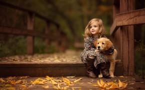 Picture autumn, leaves, bridge, girl, puppy, Retriever