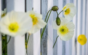 Picture macro, the fence, petals