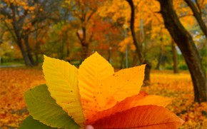 Wallpaper Macro, Autumn, Leaves, Autumn, Colors, Macro, Leaves