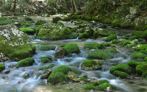 Picture nature, river, stones, moss, stream