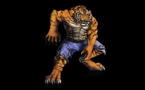 Picture tiger, predator, muscle