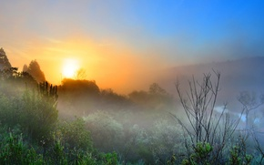 Picture the sky, trees, fog, dawn, morning