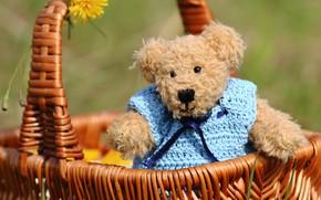 Picture summer, background, mood, toy, bear, bear, bear, blouse, basket, Teddy, flower, Mishutka