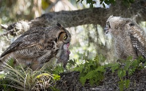 Picture birds, nature, tree, food, baby, owls, mom, mining