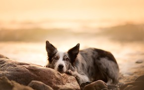 Wallpaper dog, look, each