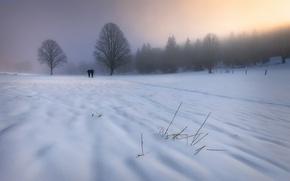 Picture winter, snow, fog, morning, walk