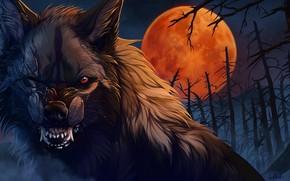 Wallpaper wool, blood Moon, Wolfroad, dead forest, night, fangs, scars, art, werewolf, evil eye, wolf, mouth, ...