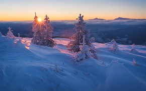 Picture winter, forest, the sky, the sun, clouds, rays, snow, landscape, sunset, mountains, branches, hills, beauty, ...