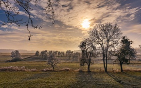 Picture trees, dawn, frozen, frosty morning