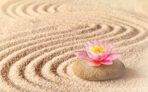 Wallpaper sand, flower, Lotus, stone