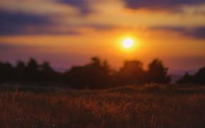 Picture field, the sky, the sun, dawn