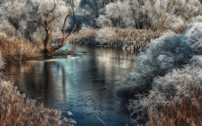 Picture frost, river, reed