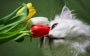 Picture white, cat, flowers, Fluffy