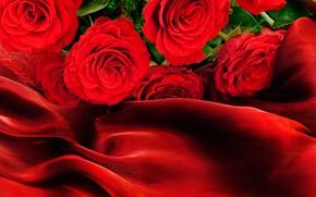 Picture roses, red, fabric, bokeh, closeup