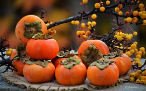 Picture autumn, branches, berries, fruit, napkin, persimmon