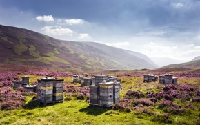 Picture nature, Scotland, United Kingdom, beehive, apiary, Auchallater