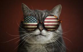 Picture cat, mustache, flag, glasses, the trick