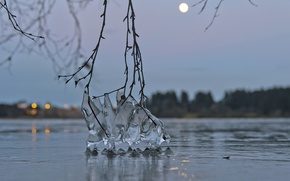 Picture water, macro, branches, lake, ice