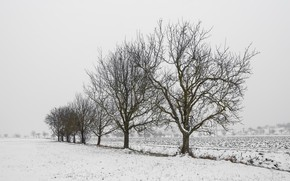 Picture winter, field, trees
