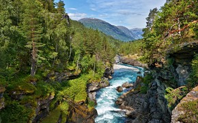 Picture Trees, River, Landscape