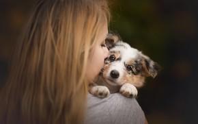 Picture look, girl, mood, puppy, face, doggie, Australian shepherd, Aussie