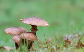 Picture grass, mushrooms, Nature