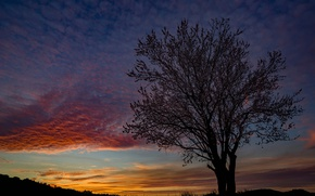 Picture tree, the evening, silhouette, glow