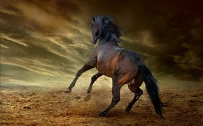 Picture the storm, the sky, clouds, clouds, pose, darkness, horse, earth, jump, horse, stallion, dust, tail, …