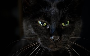 Picture Black, Look, Cat, Eyes