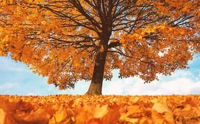 Picture autumn, leaves, tree, the crimson