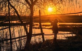 Picture the sun, tree, silhouette, girl