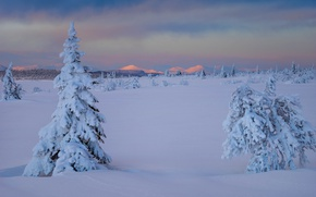 Picture winter, snow, trees, the snow, Sweden, the bushes, Sweden, Lapland, Lapland, Gitsfjallets nature reserve