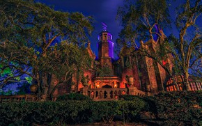 Picture trees, night, design, lights, Park, castle, lights, CA, USA, Disneyland, the bushes, Anaheim