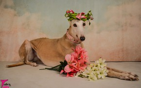 Picture flowers, animal, dog