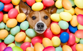 Picture dog, colorful, Easter, happy, dog, Easter, eggs, holiday, funny, the painted eggs