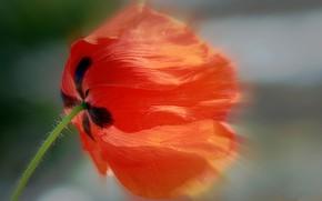 Picture the wind, Mac, petals, stem