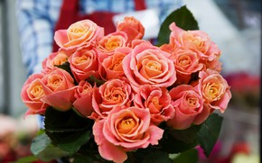 Picture flowers, orange, bouquet, Roses
