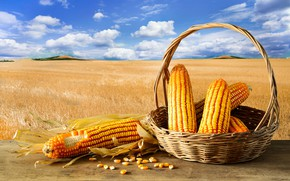 Picture field, clouds, background, The sky, corn, Basket