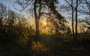 Picture The sun, Forest, Morning