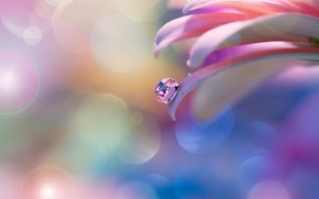 Picture flower, tenderness, drop, petals