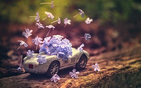 Picture flowers, background, toy