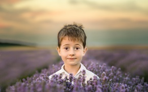 Picture field, flowers, nature, head, boy